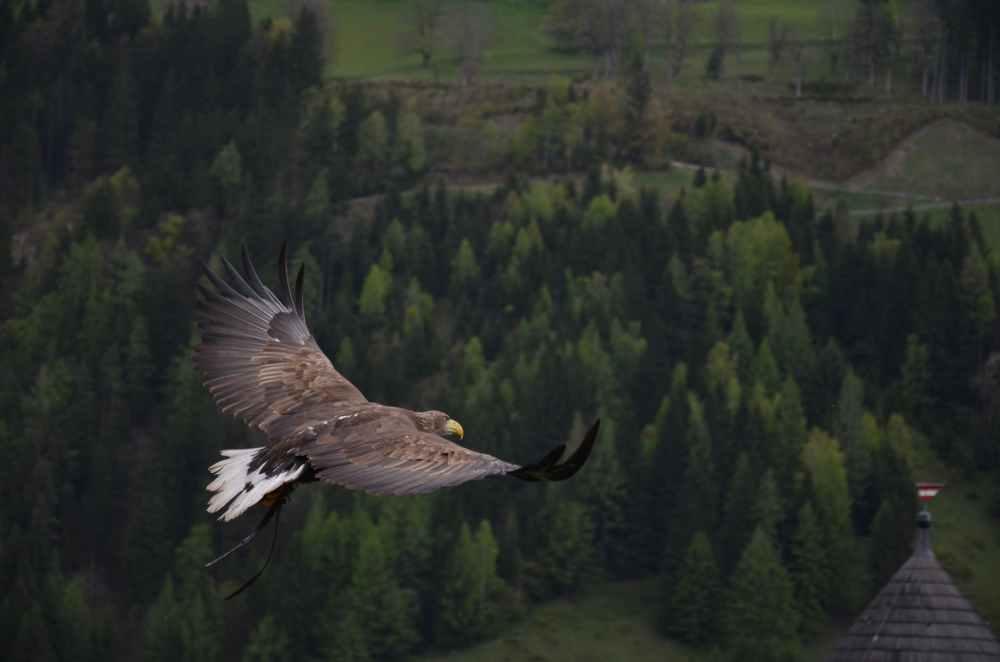 bird animal freedom fly
