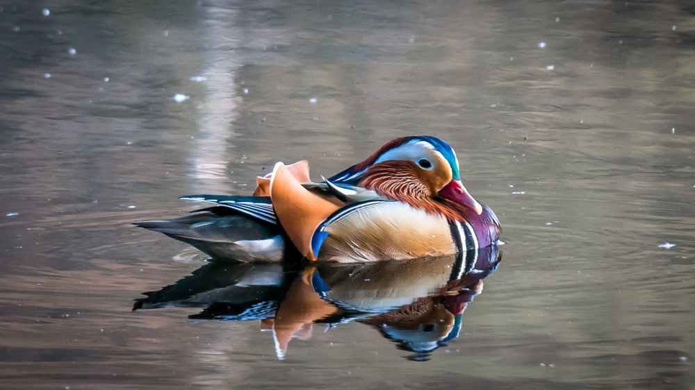 animal beak bird color