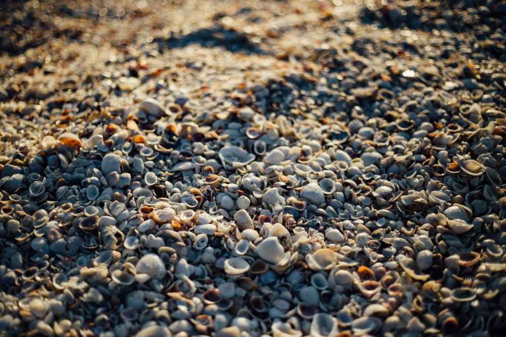 sea beach texture shells